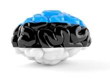 Brain With Estonian Flag