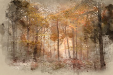 Watercolour Painting Of Stunning Colorful Vibrant Evocative Autumn Fall Foggy Forest Landscape