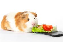 Cochon D'inde Mangeant Des Lé...