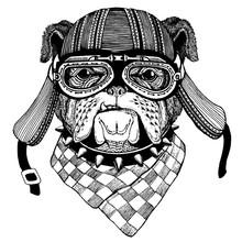 Bulldog Wild Biker Animal Wearing Motorcycle Helmet. Hand Drawn Image For Tattoo, Emblem, Badge, Logo, Patch, T-shirt.