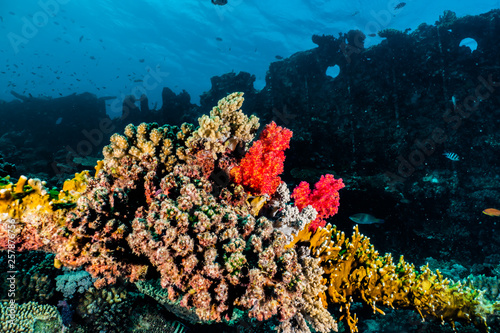 Poster Under water Coral reefs and water plants in the Red Sea, Eilat Israel