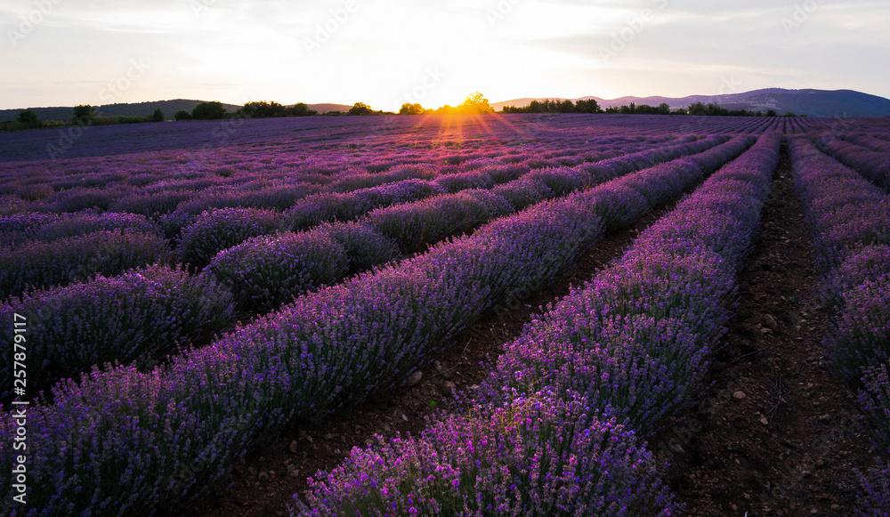 Fototapeta Lavender sunset magnificent view - obraz na płótnie