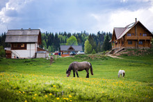 Beautiful Horses In A Meadow On Countryside Farm. Animals Grazing Grass. Summer Landscape With Dramatic Storm Sky Background.