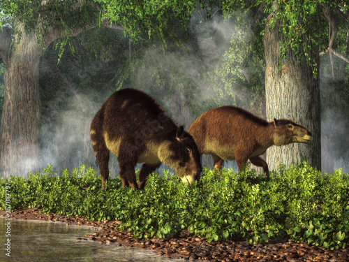 Fotografie, Obraz  These are Eohippus, or dawn horse, the earliest known ancestor of the modern horse after the extinction event that ended the reign of the dinosaurs