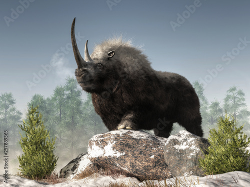 a-woolly-rhino-stands-atop-some-snow-covered-rocks-in-a-wintry-ice-age-scene-the-dark-fur-covered-ice-age-beast-is-a-massive-creature-with-a-great-curved-horn-and-a-strong-build-3d-rendering