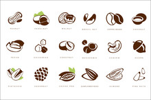 Name Nuts Set, Peanut, Hazelnut, Walnut, Brazil Nut, Coffee Bean, Coconut, Pecan, Chickpeas, Chestnut, Macadamia, Cashew, Acorn, Pistachio, Cedarnut Vector Illustrations