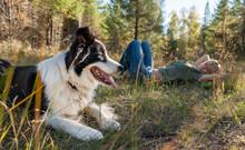 Black And White Dog Lying On Grassy Landscape Near Woman