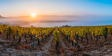 View Of Vineyards At Sunrise