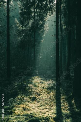 Fototapeten Wald Düsterer Wald