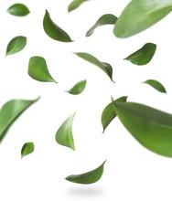 Set Of Falling Green Fresh Leaves On White Background