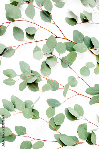 Fototapety, obrazy: green branches, leaves eucalyptus populus on white background. flat lay, top view