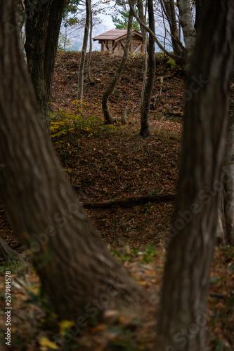 Fotografie, Obraz  林の向こうの小さな小屋