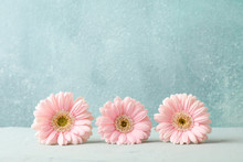 Beautiful Gerberas On White Table Against Grey Background, Space For Text