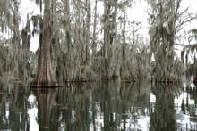 View Of Lake Martin, Louisiana...