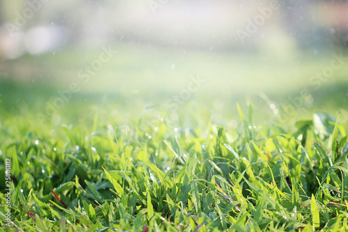 Foto op Plexiglas Weide, Moeras Beautiful nature background with close up green grass in summer or spring.