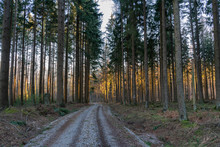 Forest With Narrow Trees Just ...