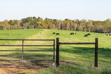 H-brace And Gate On Pasture