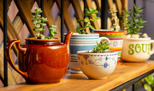 Real Reused, Recycled, Re-purposed Kitchen Pot And Cup For Succulents, Alternative To Plastic Pots, Sustainable Garden Concept