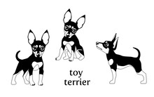 Vector Illustration Of Toy Terrier In Various Poses.