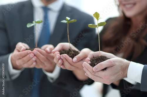 Fotografía  close up. the first shoots in the hands of the business team