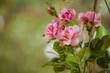 Sztuczne róże