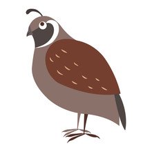 Funny Cuty Brown California Quail Vector Sticker Or Icon Isolated On White. Wild Partridge Bird Illustration Outlined With Dotted Line For Game Counters, Kids Books