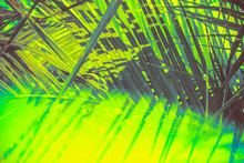 Abstract Tropical Background W...