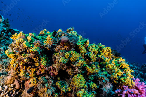 Fototapety, obrazy: Coral reefs and water plants in the Red Sea, Eilat Israel