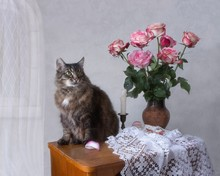 Still Life With Bouquet Of Roses And Old Furry Cat