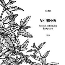 Hand Drawn Verbena Background....