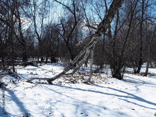 Aluminium Prints Dark grey spring forest