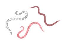 Earthworm Logo. Isolated Earth...