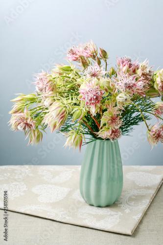 Fotografie, Obraz Serruria florida (blushing bride) flower