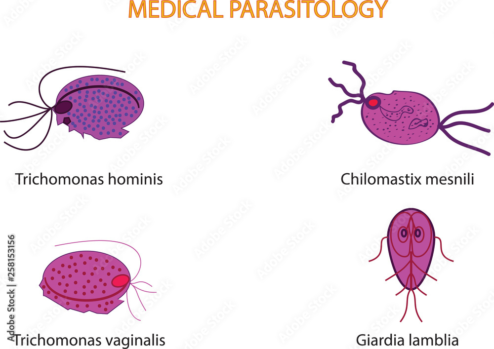 Photo & Art Print Medical Parasitology Parasitic microsco  | EuroPosters