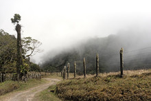 Rain Or Cloud Forest In The Vo...