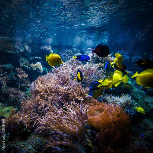 Foto op Plexiglas Koraalriffen underwater coral reef landscape with colorful fish