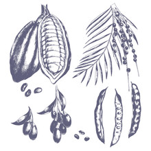 Hand Drawn Acai And Goji Berry, Carob And Cocos. Vector Set Of Healthy Vegetarian Superfood.
