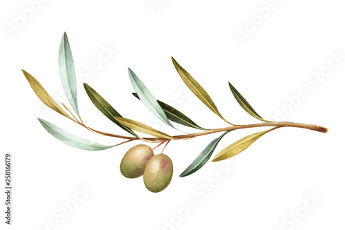 Photo  Watercolor illustration of green olives on branch