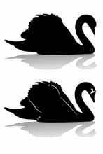 Swan Silhouette, Vector Draw