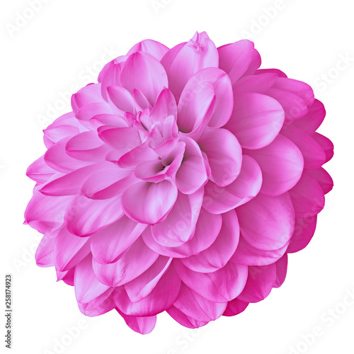 Poster de jardin Dahlia flower pink dahlia isolated on white background with clipping path. Close-up. Nature.