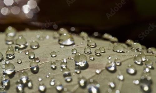 Fotografie, Obraz  Drops on leaf