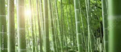 Foto auf AluDibond Olivgrun Bamboo forest in Japan