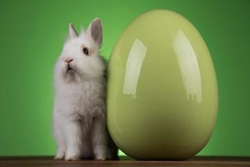 Fototapeta na wymiar Bunny, rabbit and easter eggs on green background
