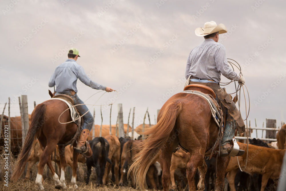 Fototapety, obrazy: Cowboys on Horses