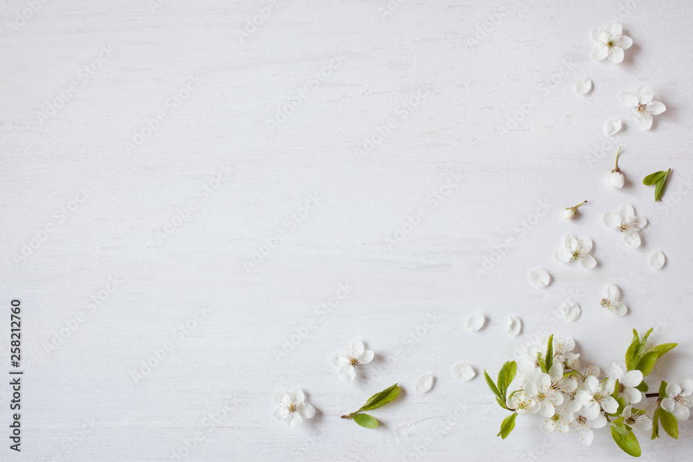 Fototapety, obrazy: Background with blooming spring cherry plum branches