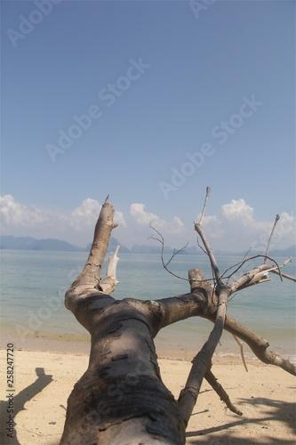 Fototapeta Tree on the beach obraz na płótnie