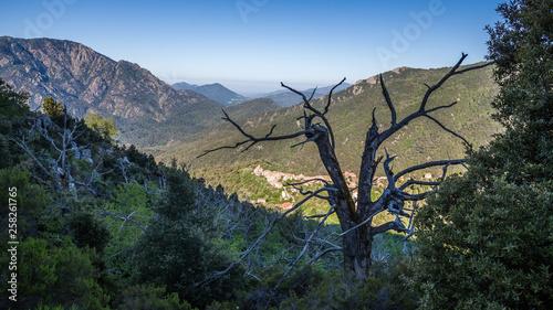 Spoed Foto op Canvas Bruggen Korsikas alpine Welt.