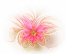 Beautiful Pink Fractal Flower