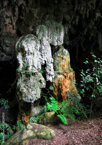 Cave formations and very rare cycad plants (Zamia decumbens) in a remote jungle cave in Toledo, Belize.