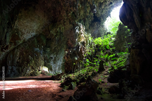 Light filters into a dark cave and illuminates the vegetation in Belize.